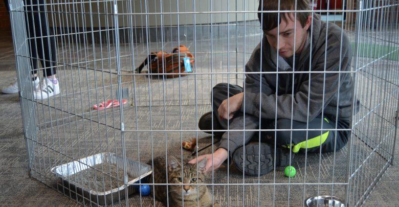 Alex Helminski petting an older male kitten in a play pen.