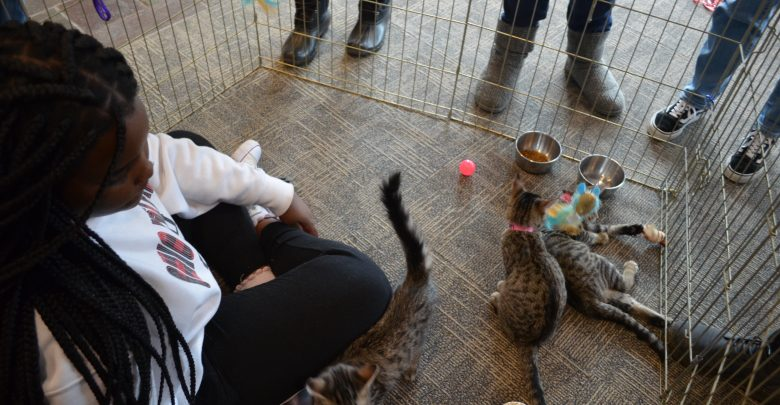 Mukami Mboche sitting in the play pen with three kittens.